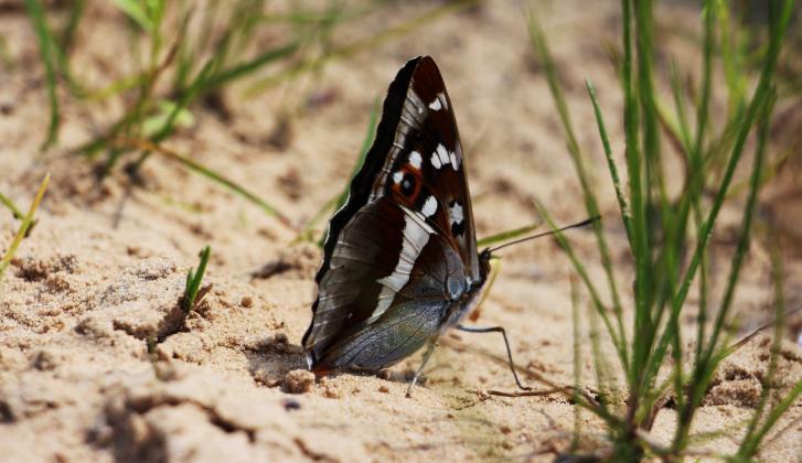 Butterfly in Cesla quarry.